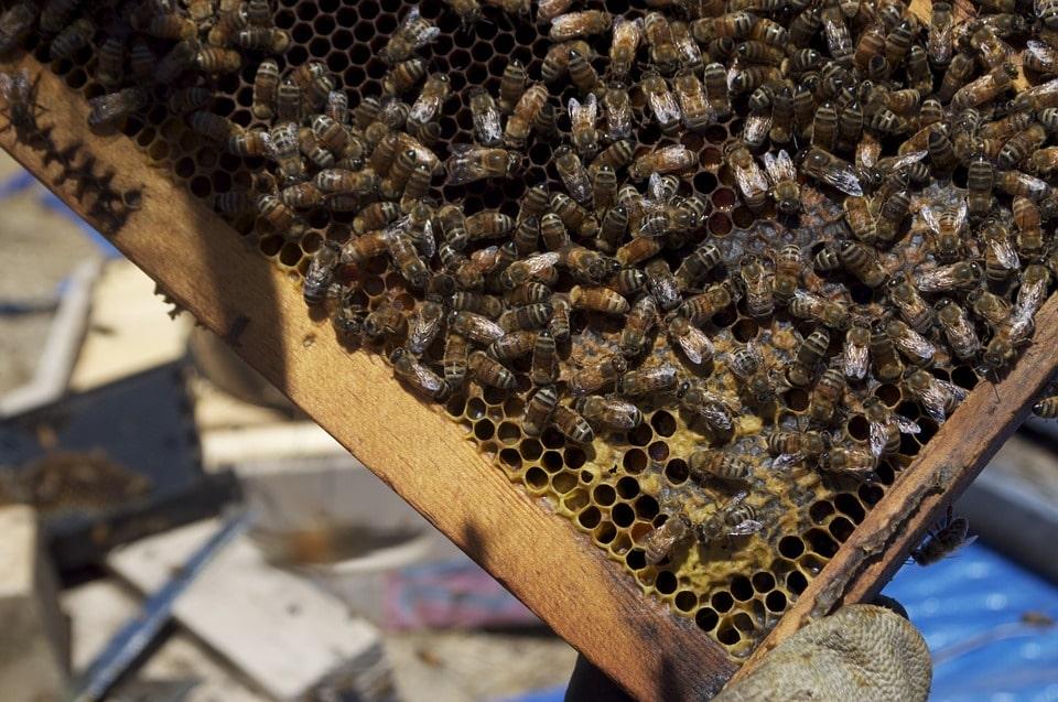 A méhpempő csodákra képes